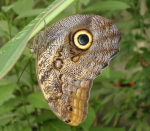 Taller de papallones