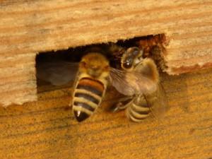 Taller d'abelles